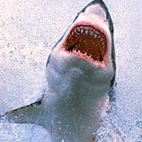air swimmers haai klein